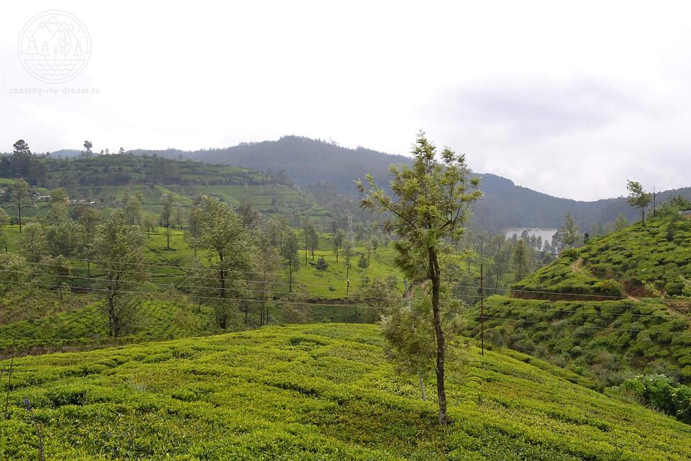 Нувара-Элия и ее чайные плантации на холмах, самобытное путешествие  по Шри-Ланке