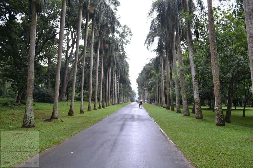 парк Flower Garden, Перадения, самобытное путешествие на  Цейлон