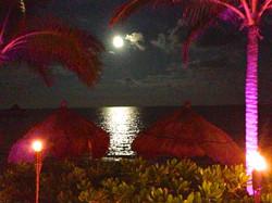 """""""Moonlight in the Tropics"""" © DJM Media"""