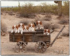 Palindrome puppies.jpg