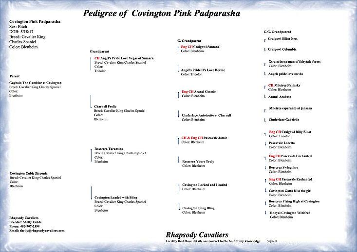 Covington Pink Padparasha - pedigree cop