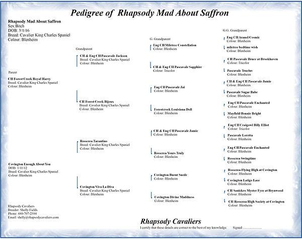Saffron's pedigree