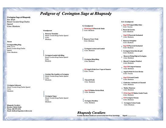 Covington Sage at Rhapsody - pedigree co