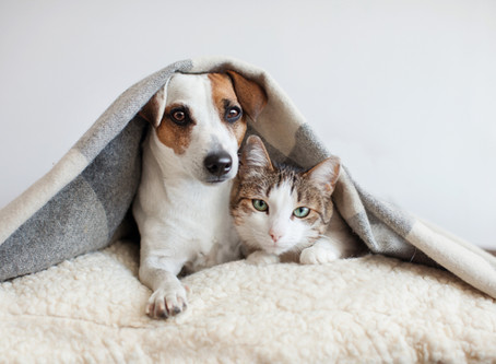 Pets: todo o cuidado com a higienização é necessário no novo normal