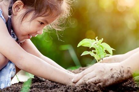 Cartilha ensina às crianças a importância de cuidar bem do solo e das plantas