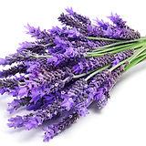 lavender flowers.jpeg