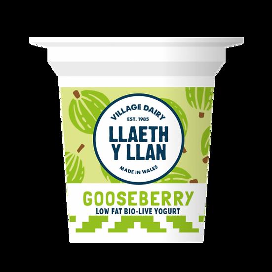 Llaeth y Llan Gooseberry Yoghurt