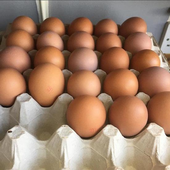 Clyttir Eggs 6