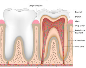 Root canals and treatment information