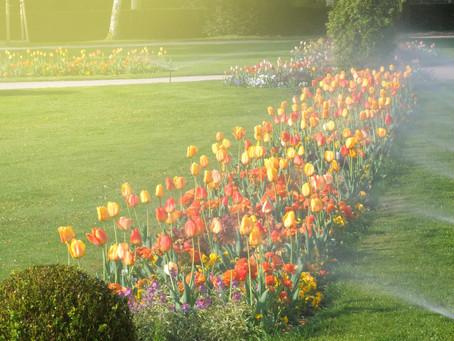The Secret to a Healthy Landscape