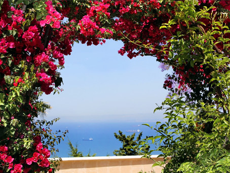 The Benefits of the Bougainvillea