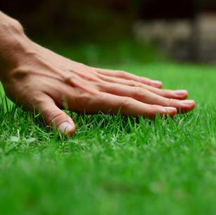 Lawn Fertilization & Weed Control