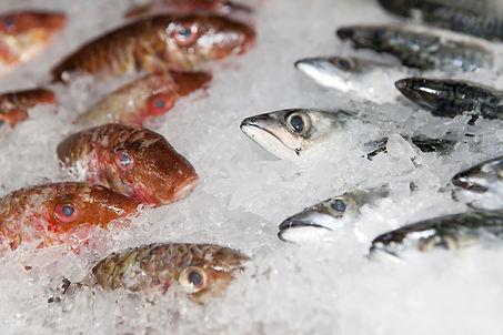 Seafood, Grenada, SIFH, Spice Isle, Fishing Ice