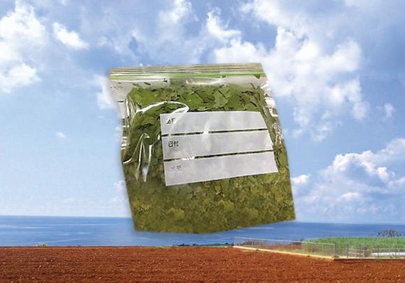 ⑫長命草 お茶の葉