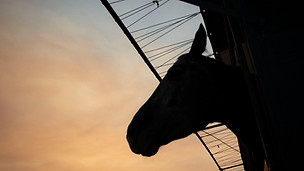 How dozens of horses were rescued from California's devastating wildfires, The Guardian