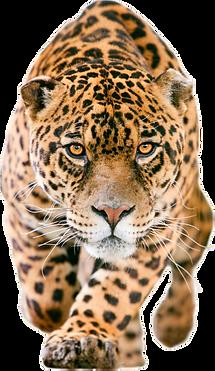 Leopardo.png