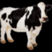 Vaca transparente.png