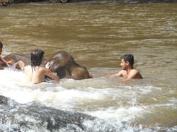 Koupání slona v Mondulkiri