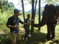 Sloni milují banány