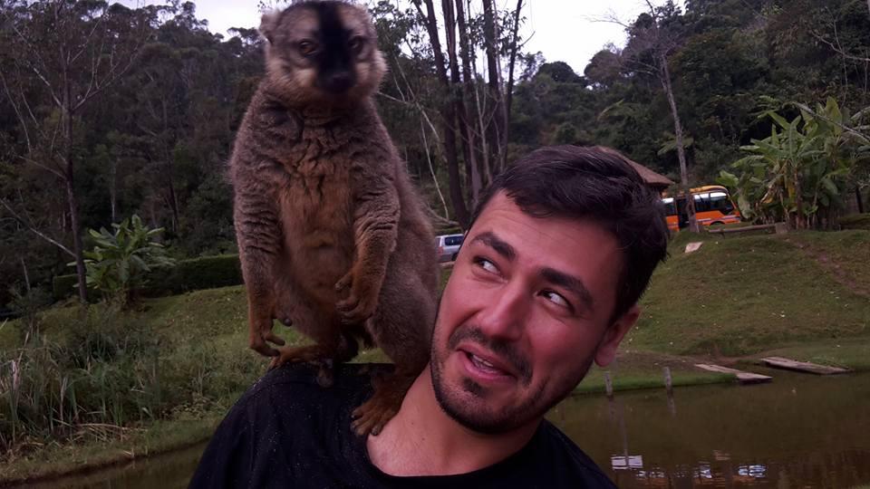 Drzý lemur