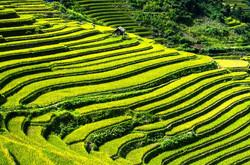 rice-terraces-164410_640