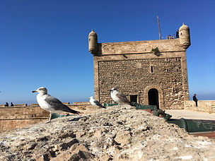 CK HAMIDI - Velký okruh Marokem: Essauira