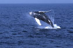Nejlepší záběr velryby ve skoku