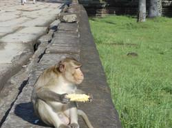A opice kukuřice :)