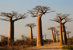 Baobab Madagascar - Travel Planner
