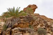 CK HAMIDI outdoorový zájezd do Jordánska: Velbloud v Daně