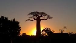 Západ slunce nad baobabem