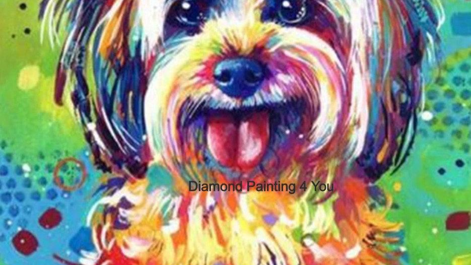Hondje kleur