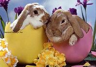 2 konijntjes in ei