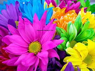 Bloemen kleur