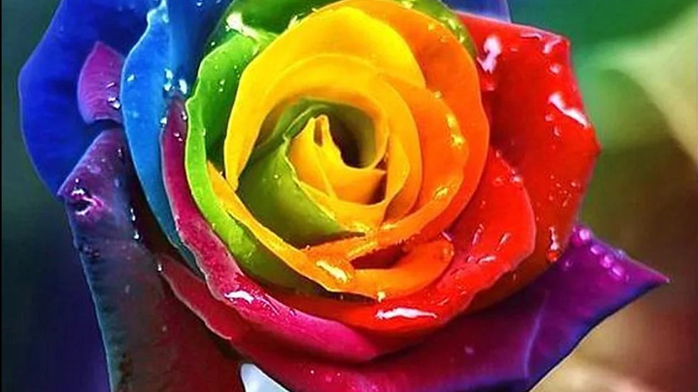 Gekleurde Roos 2