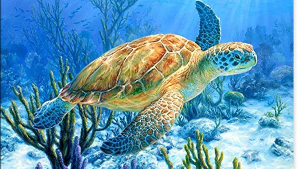Schildpad in zee