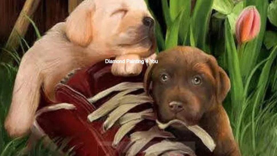 Puppy's in schoen