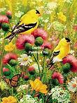 Gele vogels