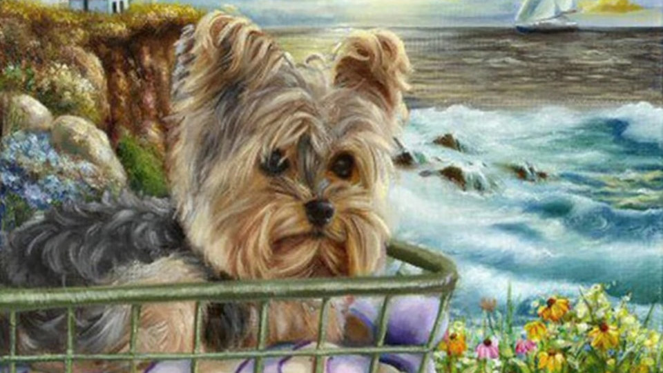 Hondje fiets bij zee