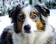 Hond in sneeuw