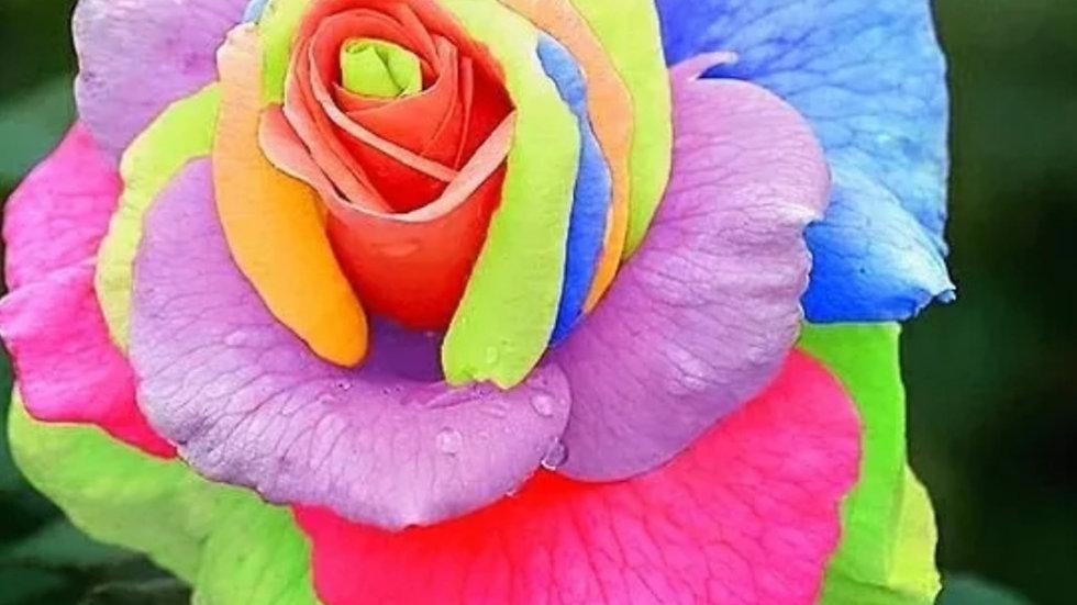 Gekleurde Roos 1