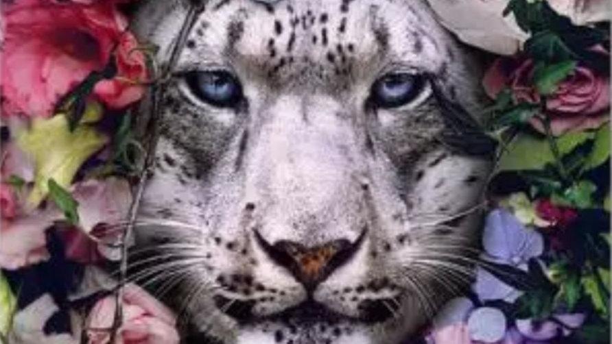 Witte tijgerkop
