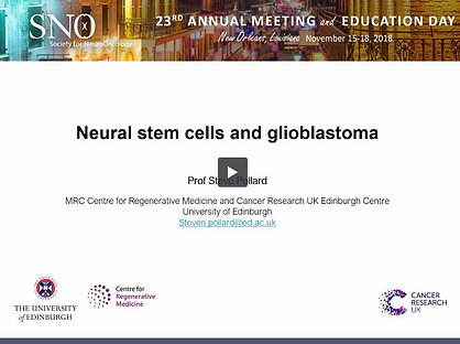Neural stem cells - Steve Pollard.png
