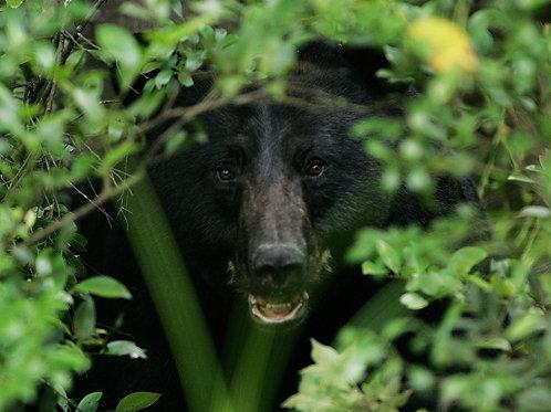 Activités observation des animaux sauvages
