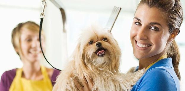 Dog grooming & Dog Wash Salon in St Peters Sydney