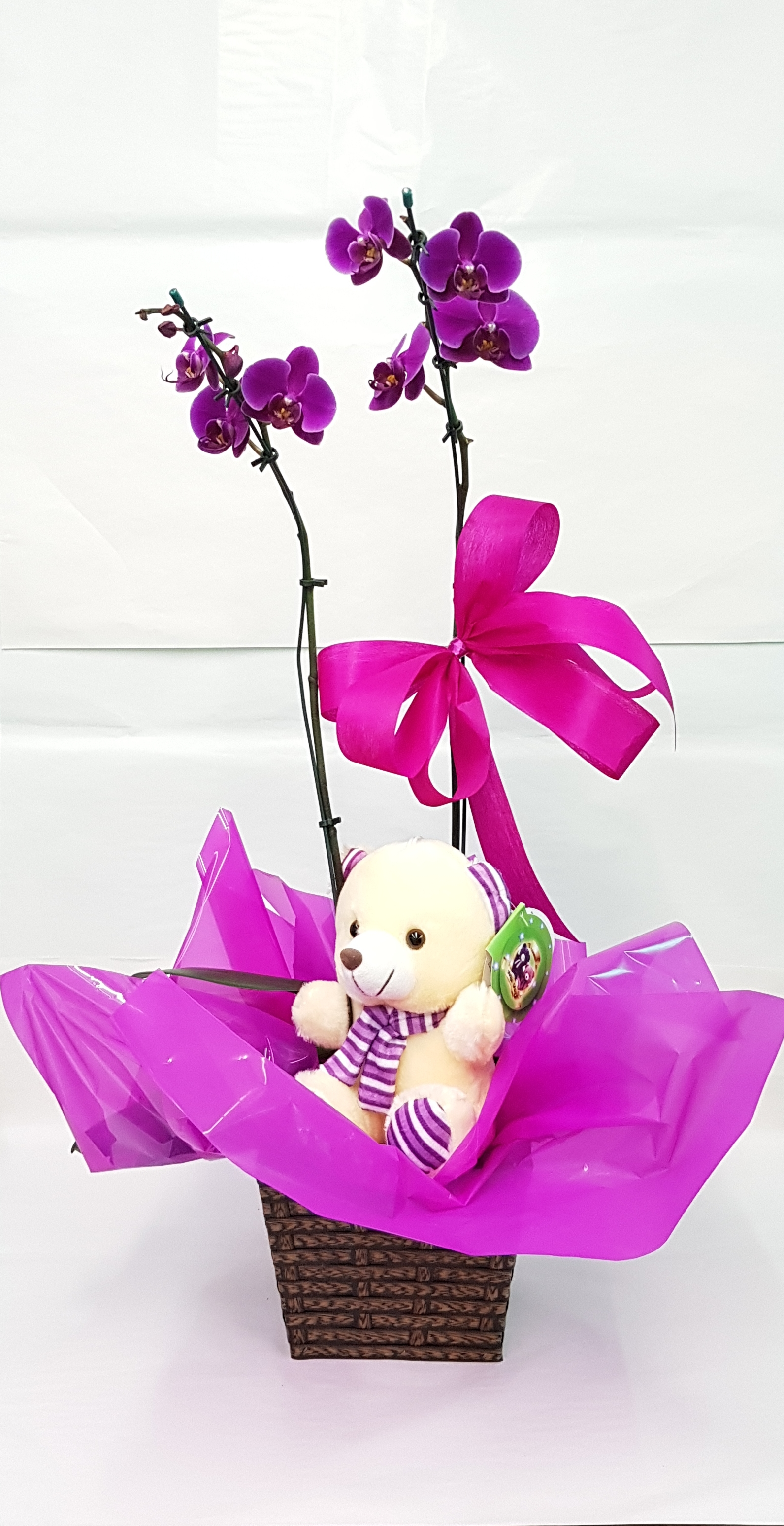 Orquídea com Urso