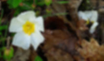 FleurPluieQuartz_edited.jpg