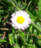 Paquerette_edited.jpg