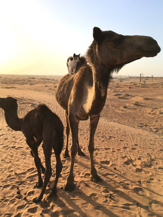 On Carrs and Camels (Part 2)