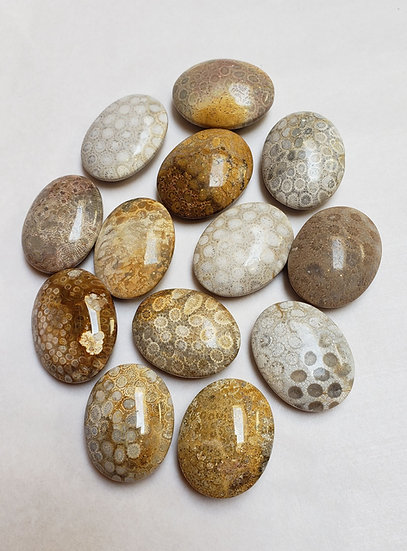 Fossil Coral Pillow/Palm Stone